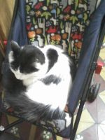 Cat in a baby stroller by BronceSaint