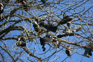 Shoe Tree by SunnyStereoSound