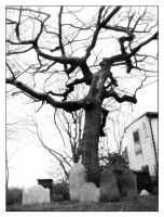 Grave Tree by StareDecisis