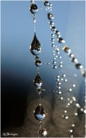 M3427 - Fragile morning. by Lothringen