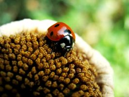 Ladybird Bud by iriscup