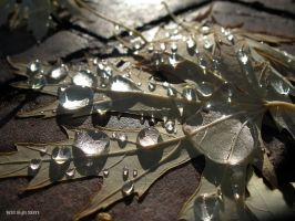 Leaf and water drops - 1 by SurfTiki