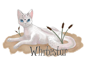 Whitestar by CeruleanOasis