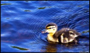 Baby Quack by simplyfate