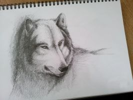 Wolf Pencil Sketch by pixelscorched