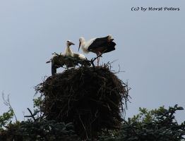Stork 7 by bluesgrass