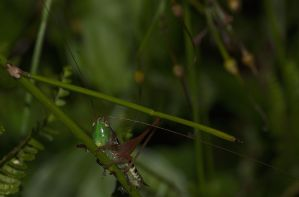grasshopper 2416 by craigp-photography