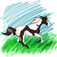Pinto Horse by TayMay135
