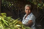 Corn Lady by vinayan