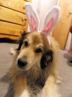 Easter Doggie by bustersnaps