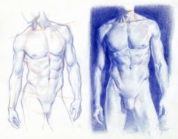 Torsos STRUCTURE AND VALUE STUDY by AbdonJRomero