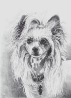 Chinese Crested Dog by ArtiaWolf
