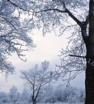 Trees in the Snow5 by Tumana-stock