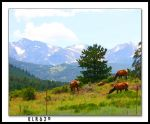 Elk Grazing by KLR620