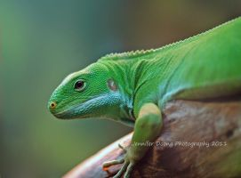 Fiji Banded Iguana by MorrighanGW