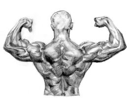 Muscular back by camp6boy