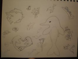 dolphins, dolphins, DOLPHINS by Stlbluesgirl101