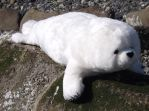 Harp Seal Pup by anna142