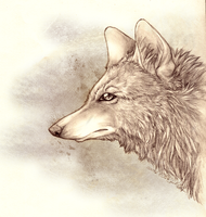 .::Inuki::. by WhiteSpiritWolf