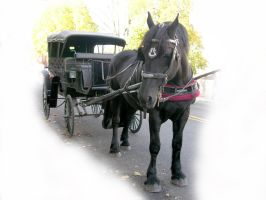 Horse and Carriage stock 2 by FairieGoodMother