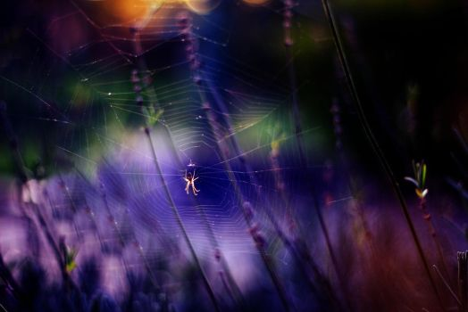 Spider by shadddow