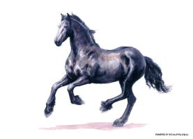 Friesian Mare - watercolor painting by AndreaSchepisi