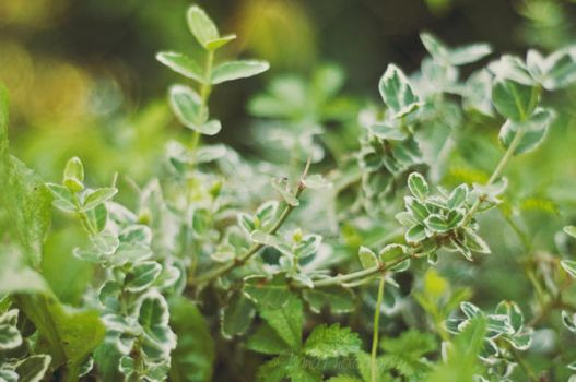 Green Plants by NanaPHOTOGRAPHY