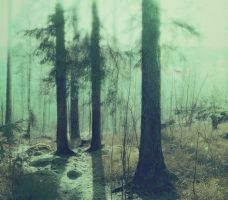 forest 11 by Amalus