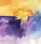 Carnation in violet and yellow by dixiekasilke