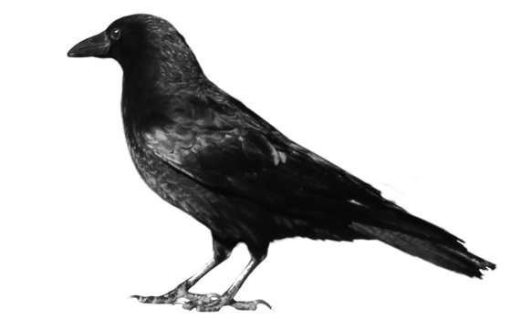 crow 7 by peroni68