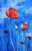 Poppies by H-Johanna