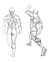 Anatomy Sketches by pureluck13
