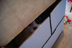 Box Cat Watches You by rioross