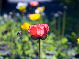 red flower with bee by ayukat