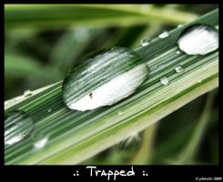 .: Trapped :. by jibirelle