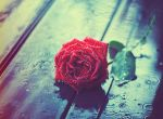Love and Rain by arefin03