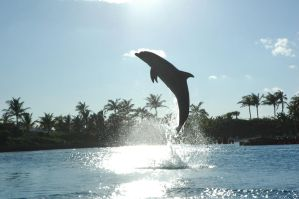 Dolphin Cay: Electra Leaps by Antarou