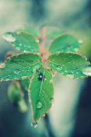 Raindrop Dreams 1. by TheZoMbieMoshPiT
