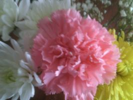 pink flower!! by BlueIvyViolet
