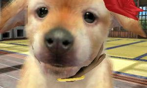 Nintendogs 3D Picture by Kanjito4You