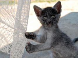 Funny little cat by marialivia16