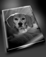 My Beagle by PeterPawn