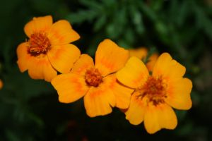 yellow Flowers by Cora-Leigh