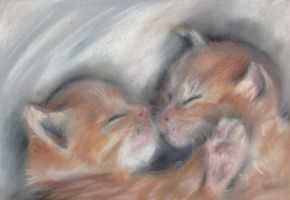 Sleeping cats by gokusia