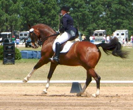 At the Horse Show IV by Equine-Resource