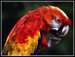 Glitter Parrot by kanes