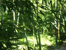 Bamboos by Yerevan-Scapes