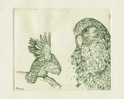 green kakapo etching by Nenu
