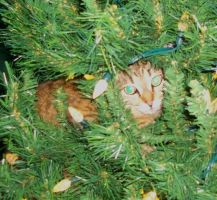 Bobbi in the Christmas tree before the decorations by venicet