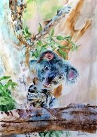 Koala bear by danuta50